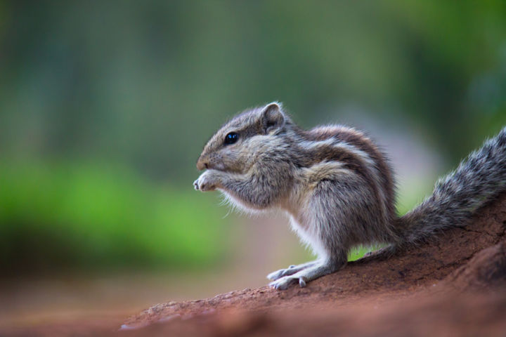 """Photography titled """"Squirrel"""" by Robbie Ross, Original Art,"""