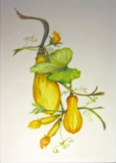 Summer Squash - Painting,  18x15 in ©2013 by Rob DeBartolo -