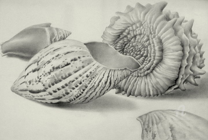 """Drawing titled """"Shells, real and fa…"""" by Roger Thijs, Original Art, Pencil"""