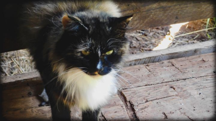 """Photography titled """"'Barn Cat' - Photo…"""" by Natures Generations, Original Art, Digital Photography"""