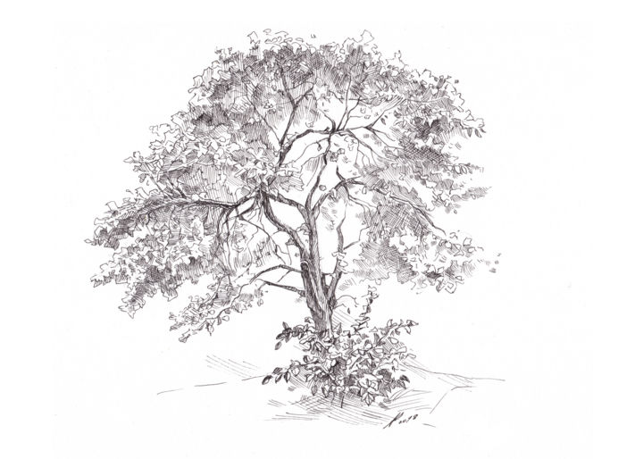 The Old Apple Tree Drawing by Aleksandr Petrunin | Artmajeur
