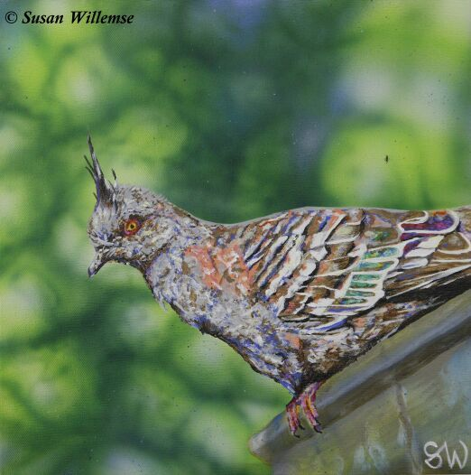 """Painting titled """"Crested Pigeon"""" by Susan Willemse, Original Art, Acrylic Mounted on Stretcher frame"""
