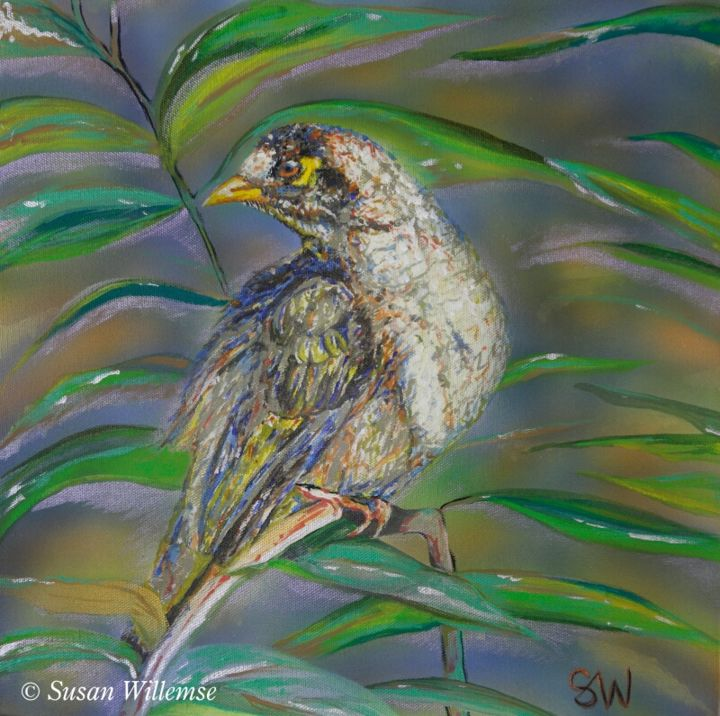 """Painting titled """"Noisy Miner"""" by Susan Willemse, Original Art, Acrylic Mounted on Stretcher frame"""