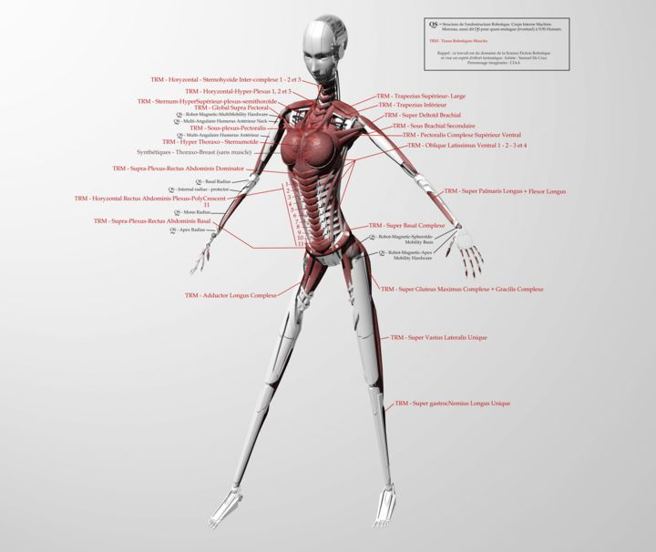 virtuality-ciaa-first-anatomical-muscle-work-.jpg - ©  robot, robotic, anatomy, robotique, anatomie, ciaa, virtuality Online Artworks