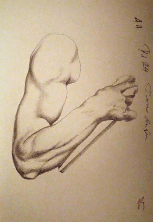 """Drawing titled """"Arm muscle study"""" by Marina Altieri, Original Art, Graphite"""