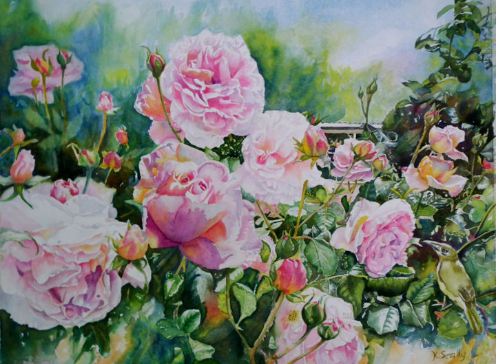 Pink Roses with Honeyeater  - Fortune St Narrogin - Painting,  18x14 in ©2014 by Scally Art -                                                                        Realism, Paper, Birds, Flower, roses, garden, honeyeater, bird, flowers