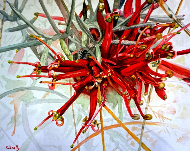 Grevillea Huegelii  at Bullock Hills - ©  Grevillea Huegelii, Floral, flower, Bullock Hills, Dumbleyung, Wildflower, Scally Art, Kerry Scally Online Artworks
