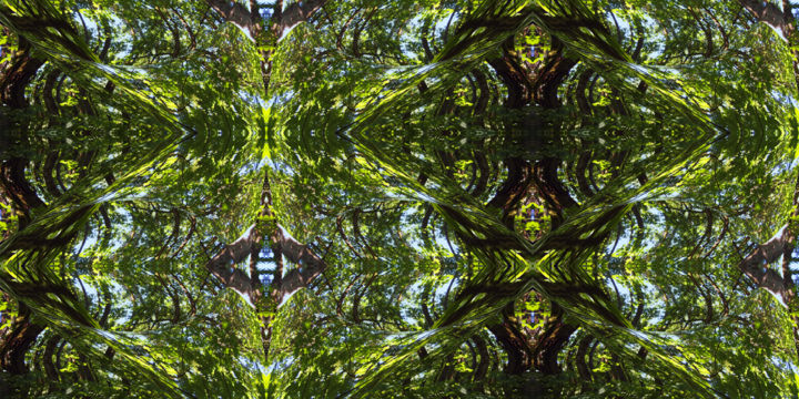 Forest Abstract 28 - © 2018 digital abstract, abstract landscape, forest, trees, patterns, geometry, series, organic, symmetry, semmetrical, balance, natural, harmony, kaleidoscopic Online Artworks