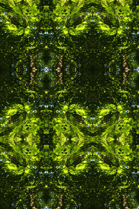 Forest Abstract 41 - © 2018 digital abstract, image series, trees, foliage, summer, symmetry, symmetrical, geometry, geometric patterns, nature abstract, modern abstract, contemporary abstract, organic image Online Artworks