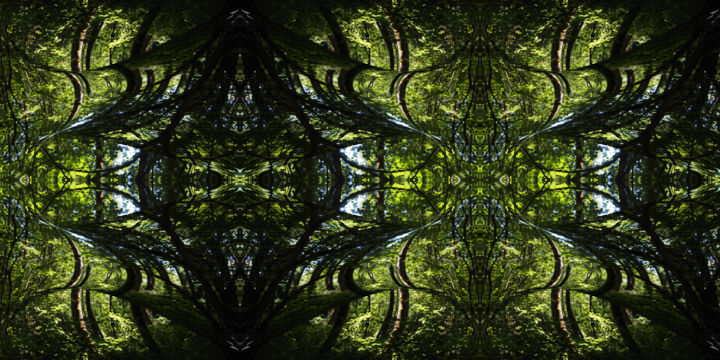 Forest Abstract 53 - © 2018 digital abstract, modern art, modern image, contemporary art, contemporary image, symmetry, symmetrical art, symmetrical image, organic art, organic image, kaleidoscopic art, kaleidoscopic image, horizontal image, image series, abstract landscape, abstract image, color image Online Artworks