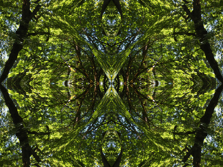 Forest Abstract 65 - Digital Arts, ©2019 by Kenneth Grzesik -                                                                                                                                                                                                                                                                                                                                                                                                                                                                                                                                                                                                                                                                                                                                                                                                                                                                                                                                                                                                                                                  Abstract, abstract-570, Abstract Art, Geometric, Nature, Patterns, Tree, digital abstract, modern, contemporary, series, kaleidoscopic, symmetry, symmetrical, horizontal, forest, trees, patterns, green, foliage, color image, digital photo