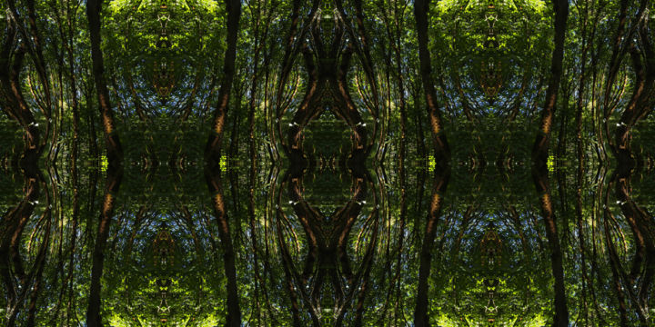 Forest Abstract 78 - Digital Arts, ©2019 by Kenneth Grzesik -                                                                                                                                                                                                                                                                                                                                                                                                                                                                                                                                                                                                                                                                                                                                                                                                                                                                                                                                                                                                                                                  Geometric, geometric-572, Geometric, Landscape, Nature, Patterns, Places, digital abstract, icon, iconic, symmetry, symmetrical, series, modern, contemporary, forest, trees, summer, kaleidoscopic, green, foliage, abstract landscape