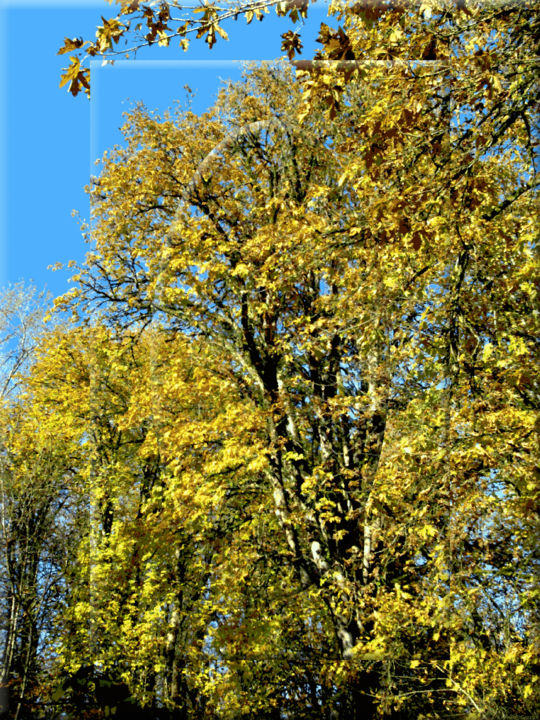 Autumn View 4 - Photography, ©2020 by Kenneth Grzesik -                                                                                                                                                                                                                                                                                                                                                                                                                                                                                                                                                                                                                                                                                                                                                                                                                                                                                                                                                                                                                                                  Classicism, classicism-933, Colors, Landscape, Light, Nature, Seasons, digital abstract, contemporary landscape, series, autumn colors, forest, trees, blue sky, vector art, autumn trees, forest landscape, modern image, ecological art, ambient art, environmental image, art eco deco