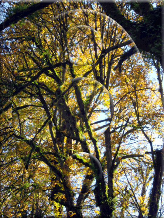 Autumn View 10 - Photography, ©2020 by Kenneth Grzesik -                                                                                                                                                                                                                                                                                                                                                                                                                                                                                                                                                                                                                                                                                                                                                                                                                                                                                                                                                                                                  Classicism, classicism-933, digital abstract, landscape, trees, autumn, fall colors, geometric, series, contemporary, modern, nature, optics, vector, photoshop, color image, environmental, ecological, art eco deco, digital design, digital image