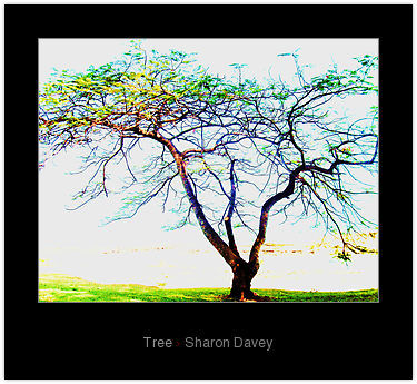 """Photography titled """"Tree"""" by Sharon Davey, Original Art,"""