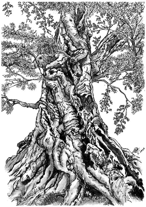 Tree - Drawing,  11.7x8.3 in, ©2020 by Shorove -                                                                                                                                                                                                                                                                                                                                                                                                                                                                                                                                                                                                                                                                                                                                                                                                                                                                                                                                                                                                                                                                                                                                                                                      Illustration, illustration-600, Nature, Black and White, Tree, Drawing, Gel pen, Ink, Abstract, Art, Black and White, pen and ink, a4, ink on paper, pen, artwork, tree, pencil, sketch, sketching, nature, handdrawn, prints, hatching, small art