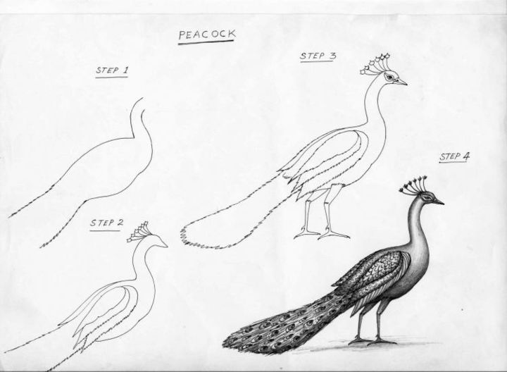 peacockoriginal illustration drawing 29x21 cm 2003 by mr t silappathikaram