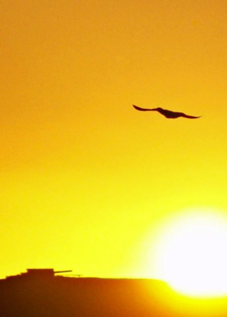 """Photography titled """"Freedom"""" by Simonboyd, Original Art,"""