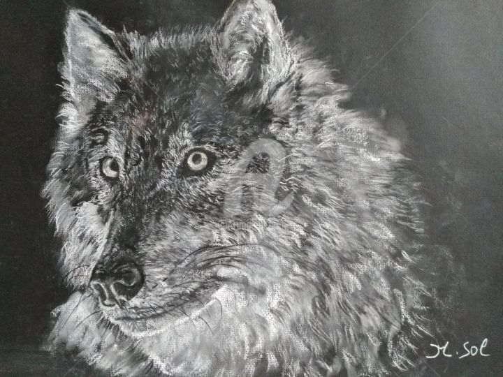 Loup - Drawing,  15.8x19.7 in, ©2018 by sol.art -                                                                                                                                                                                                                                                                                                                                                              Hyperrealism, hyperrealism-612, Animals, animaux sauvages, portraits, loup, photorealiste