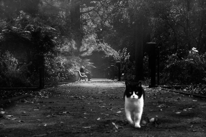 Cat Photography, classicism, artwork by Sol Marrades