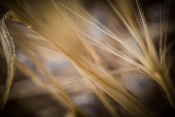 """Photography titled """"Whispers of a Fores…"""" by Sonja Bajramovic, Original Art,"""