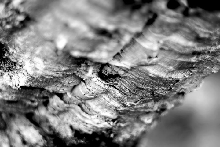 Cork Texture - Photography,  40x60x3 cm ©2019 by Steevens Hill -                                                                                                                                                                        Abstract Art, Expressionism, Surrealism, Aluminum, Other, Cotton, Metal, Paper, Tree, Abstract Art, Light, Nature, bnw, black and white, abstract photography, steevens hill art, texture, nature, liege, chêne liege, arbre, tree, dark and white, artsy shark, healing power of art, serie limitée, photo abstraction, lyrisme, gris, grey, blanc, matter, matiere, Limited Edition, Black and White