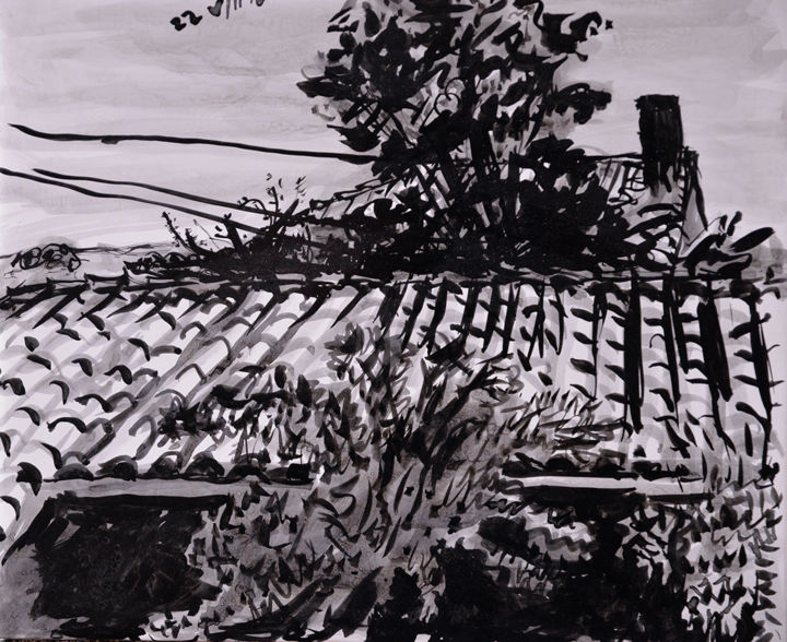 Maple and Rose.jpg - Drawing,  26x30x1.5 cm ©2016 by Stephen West -                                                                                                            Modernism, Wood, Architecture, Garden, Landscape, Rural life, Tree, ink, tree, france, landscape, village