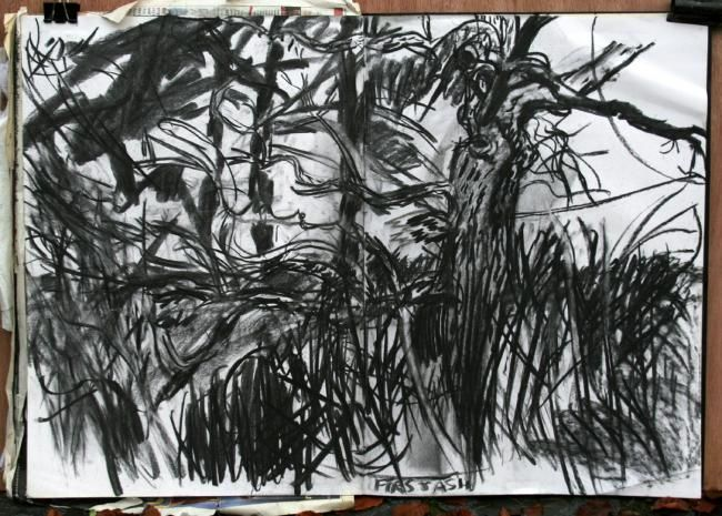Ash I - Drawing,  23.6x33.5 in, ©2012 by Stephen West -                                                                                                              Black and White, Ash tree and pines
