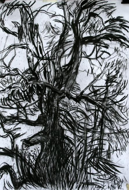 Ash II - Drawing,  60x75 cm ©2012 by Stephen West -                            Black and White, Ash Tree and pines