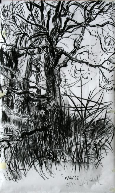 Ash III - Drawing,  85x120 cm ©2012 by Stephen West -                            Black and White, Ash tree and pines