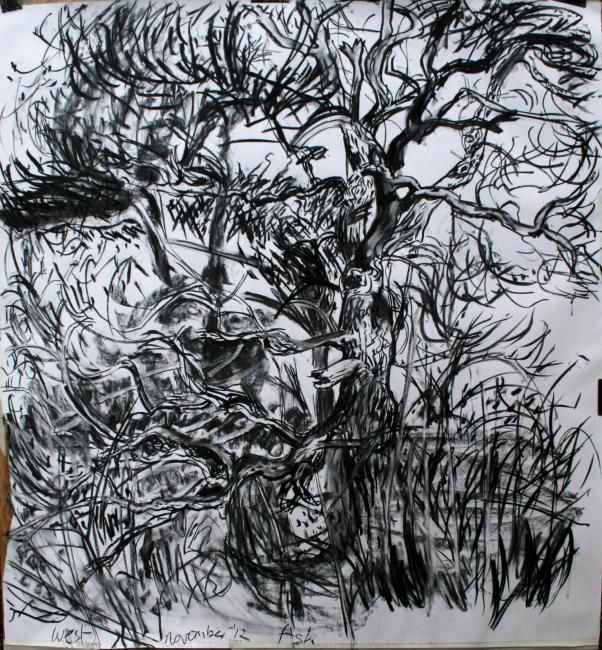 Ash IV - Drawing,  120x127.5 cm ©2012 by Stephen West -                            Black and White, Ash Tree and pines