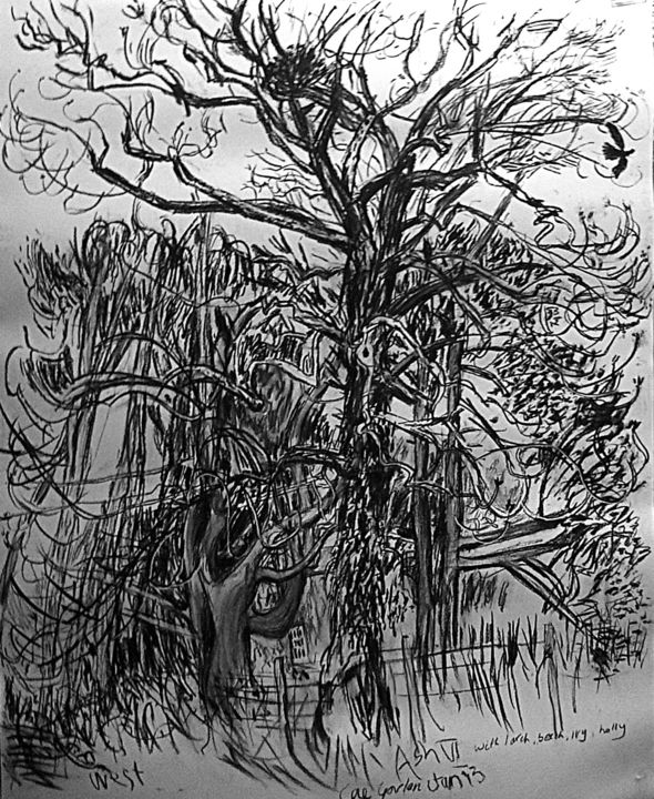 ash-vi-b-w.jpg - Drawing,  153x122x5 cm ©2014 by Stephen West -                            Black and White, Ash Tree nature figurative expressive charcoal drawing