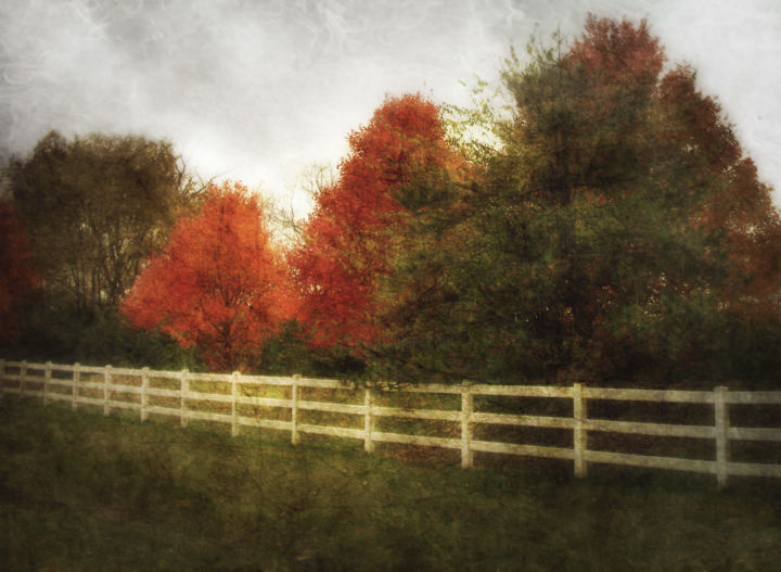 Rural Autumn - Photography, ©2016 by SkyLucy -                                                                                                                                                                                                                                              Landscape, Nature, Rural life, Seasons, Tree