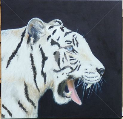 tigre blanc - Painting,  19.7x19.7 in, ©2011 by Sbx -                                                                                                          tigre, blanc