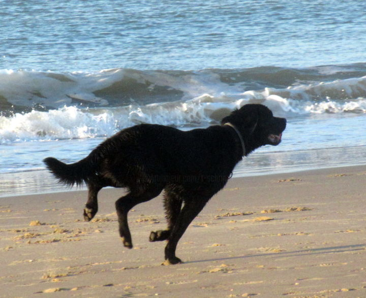 dog at the beach - Photography, ©2020 by Tom Schrijver -                                                                                                          Dogs, Beach