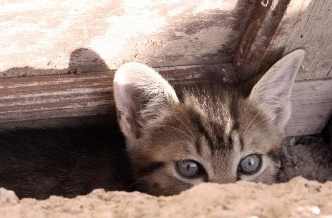 brave new world - Photography,  8.3x11.8 in, ©2006 by Poppy Flower -                                                              PHOTOGRAPHY OF A YOUNG CAT LOOKING OVER THE EDGE OF A WALL