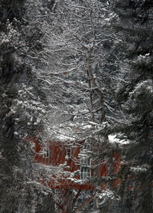 """Photography titled """"Forest Dwelling"""" by Sarna, Original Art, Digital Photography Mounted on Cardboard"""