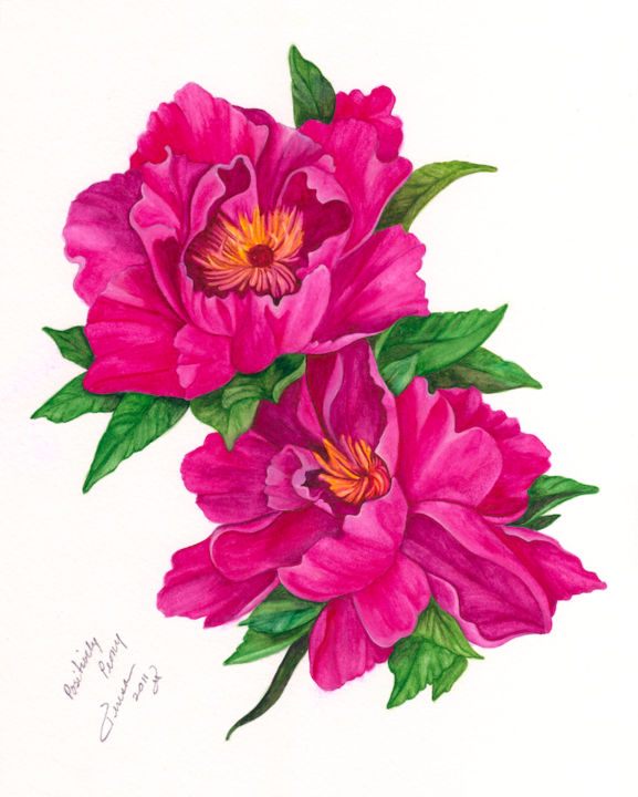 Positively Peony.jpg - Painting,  10x8 in, ©2014 by Teresa Freedom -                                                              Flower