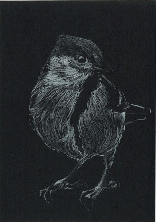 MESANGE NOIR 3 - Drawing,  7.1x5.5 in, ©2020 by Thibaut Dapoigny -                                                                                                                                                                                                                                                                                                                                                                                                                                                                                                                                                                                                                                                                                                                                                                          Illustration, illustration-600, Animals, artwork_cat.Birds, Nature, nature, bird, birds, animal, animals, animaux, oiseau, oiseaux, dessin, drawing, wildlife