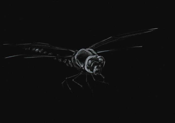 BUZZ L'ÉCLAIR - Drawing,  5.5x7.1 in, ©2020 by Thibaut Dapoigny -                                                                                                                                                                                                                                                                                                                                                          Figurative, figurative-594, animal, animaux, wildlife, libelulle, insect