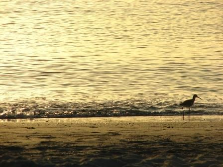 """Photography titled """"sandpiper sunset"""" by Tony Taylor, Original Art,"""