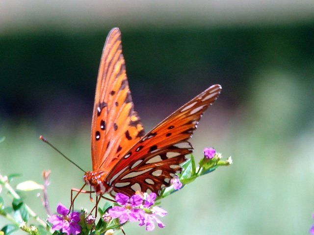 """Photography titled """"butterfly !"""" by Tony Taylor, Original Art,"""