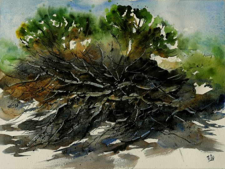Intrecci - Painting,  11.8x15.8 in, ©2020 by Tito Fornasiero -                                                                                                                                                                                                                                                                                                                                                                                                                                                                                                                                                                                                                                                                                  Impressionism, impressionism-603, Tree, Nature, Landscape, Beach, Acquerelli, Watercolors, Dipinti ad acquerello, Paesaggi, Acquerelli di Paesaggi, Alberi, Paesaggi con piante, Tito Fornasiero