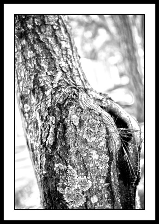 """Photography titled """"Trunks 2"""" by Touche, Original Art, Digital Photography"""