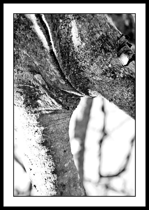 """Photography titled """"Trunks 3"""" by Touche, Original Art, Digital Photography"""