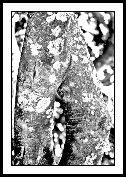 """Photography titled """"Trunks 4"""" by Touche, Original Art, Digital Photography"""