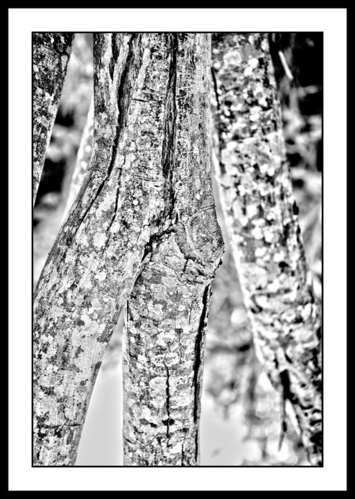 """Photography titled """"Trunks 6"""" by Touche, Original Art, Digital Photography"""