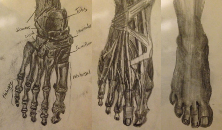 Study Of The Foot (v-kotnik99)