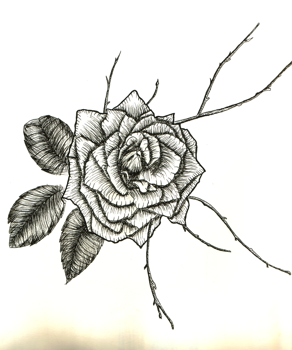 Rose Drawing By Valentine Fasquel Artmajeur