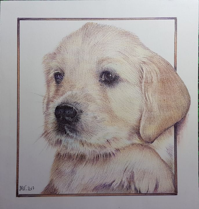 Bébé golden retriever - Drawing,  20x20 cm ©2017 by Valérie Jouffroy Ricotta -                                                            Illustration, Other, Animals, animaux, dessin, stylo bille, golden retriever, chiot, chien